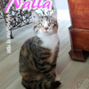 Nalla, Chaton à adopter