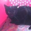 Ebony, Chat à adopter