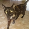Mimi, Chat  à adopter