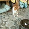Almeo, Chat à adopter