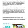 Recherche de familles d'accueil, Chiot à adopter