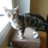 Oria, Chat  à adopter
