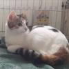 Blanche, Chat européen à adopter
