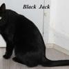 Blackjack, Chat  à adopter