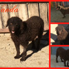 Wanda, Chien à adopter