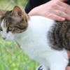 Jilly jean, Chat gouttière à adopter