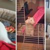 22 rats mâles réhabilités de laboratoire, Animal à adopter