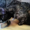 Alma, Chat  à adopter