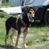 Malibu, Chiot  à adopter