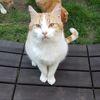 Fry, Chat européen à adopter