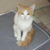 Oscar (neva), Chaton  à adopter