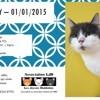 Kentuky, Chat à adopter