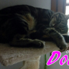 Douce, Chat à adopter