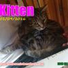 Kitten, Chat à adopter