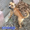 Snoop n°14107, Chien à adopter