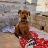 Estrella, Chiot  à adopter