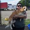 Pépita, Chien beagle à adopter