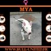 Mya, Chien  à adopter