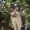 Petunia, Chat  à adopter
