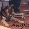 Angela, Chien à adopter