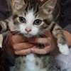 Olly, Chaton gouttière à adopter