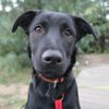 Luckie, Chiot  à adopter