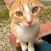 Simba - urgent, Chat  à adopter