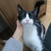 Eria, Chat européen à adopter