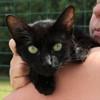 Lucilla, Chat gouttière à adopter