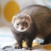 Niva, Animal à adopter