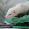 Mimi, Animal à adopter