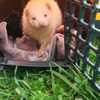 Oscar, Animal  à adopter