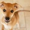Fabio, Chiot à adopter