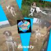 Bounty, Chien à adopter