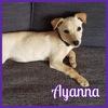 Ayanna, Chiot à adopter
