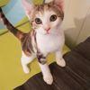 Zira, Chaton européen à adopter