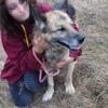 Floyd, Chien berger allemand à adopter