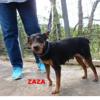 Zaza, Chien à adopter
