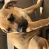 Marla, Chiot  à adopter