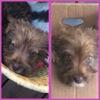 Moka, Chiot  à adopter