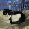 Nevan, Chat à adopter