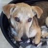 Nikita, Chiot à adopter