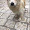 Fatya, Chiot à adopter
