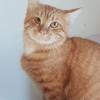 Mac brown, Chat à adopter