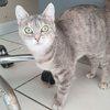 Mya, Chat à adopter