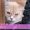 Nina de montereau, Chat à adopter