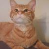 Bretzel, Chat à adopter