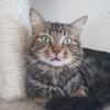 Ruben, Chat à adopter