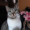 Salsifi, Chat à adopter