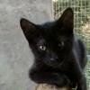 Felix, Chaton à adopter